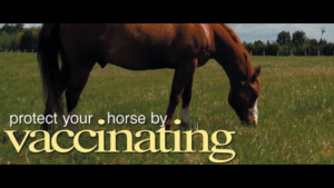 Protect your horse image